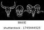 human skull and animals skulls...   Shutterstock .eps vector #1745444525