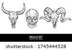 human skull and animals skulls...   Shutterstock .eps vector #1745444528