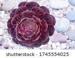 closeup dark purple fresh... | Shutterstock . vector #1745554025