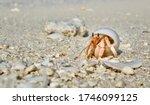 Maldives Wildlife Beach Hermit...