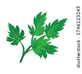leaf of celery vector icon...   Shutterstock .eps vector #1746123245