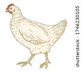 vector cartoon white hen.... | Shutterstock .eps vector #1746230105