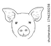 vector sketch pig face. front... | Shutterstock .eps vector #1746230258