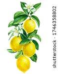 blooming lemon branch on an...   Shutterstock . vector #1746358802
