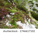 Colorful Alpine Garden With...