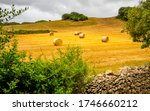 A Group Of Rolled Hay Bales Was ...