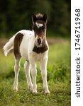 The Blue Eyed Foal Pony Seems...