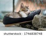 Little Kitten Sleep In The...