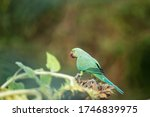 Colorful Birds  Living In The...