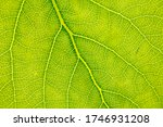 green leaf with tree as... | Shutterstock . vector #1746931208