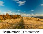 Autumn Forest Highland Plateau...
