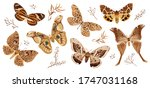 A Collection Of Butterflies And ...