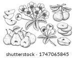 vector sketch pear decorative...   Shutterstock .eps vector #1747065845