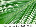 leaf texture | Shutterstock . vector #174710216