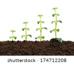 young plant  in the soil | Shutterstock . vector #174712208