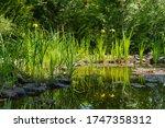 Beautiful Garden Pond. Swamp...