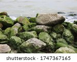 Rocks Covered With Dry Green...