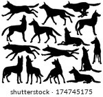 Stock vector set of editable vector silhouettes of wolves in different poses 174745175