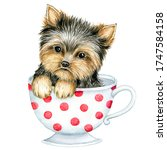 Cute Puppy  Yorkshire Terrier...