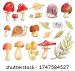 Mushroom Snail Willow Birch...