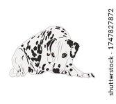 Dalmatian Dog Isolated On White ...
