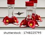 Hummingbird Hovering At A Red...