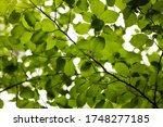 fresh and green leaves in the... | Shutterstock . vector #1748277185