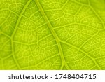 close up to detail of leaf ... | Shutterstock . vector #1748404715