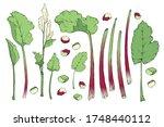 vegetable vector set with...   Shutterstock .eps vector #1748440112