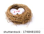 Nest Egg With Broken Egg And ...