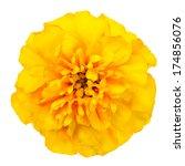 Marigold Yellow  Flower Petals...