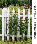 picket fence with echinacea | Shutterstock . vector #17487145