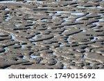 Wadden Sea By Low Tide In Detail