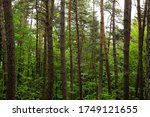 forest trees. nature green wood ... | Shutterstock . vector #1749121655