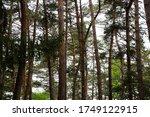 morning light entering the... | Shutterstock . vector #1749122915