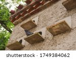Small photo of A black pigeon with a green neck is perched on an exterior roost, in front of the pigeonhole of a traditional brick dovecot featuring a tiled roof, in an organic farm in Occitanie, Southern France