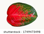 colorful detail of  leaf... | Shutterstock . vector #1749473498