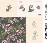 vector illustration verbena... | Shutterstock .eps vector #1749498308