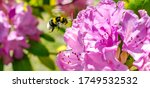Bee Flying To Pink Flowers....