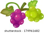 illustration of isolated grapes ... | Shutterstock . vector #174961682