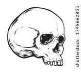 human skull vector illustration.... | Shutterstock .eps vector #1749662855