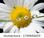 Beautiful Spring Time Daisy's...