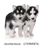 Stock photo cute little husky puppy isolated on white background 174989876
