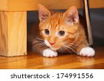 Stock photo animals at home red cute little baby cat pet kitten laying on floor 174991556