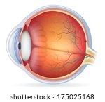 Human Eye Anatomy Diagram ...