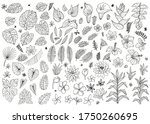 set of abstract tropical plants ...   Shutterstock .eps vector #1750260695