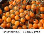 Orange Cherry Tomatoes For...