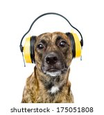 Dog With Headphones For Ear...