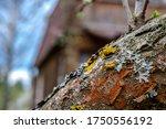 Harmful Growths On A Tree ...