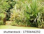 Bohol  Ph   Sept 1   Garden...